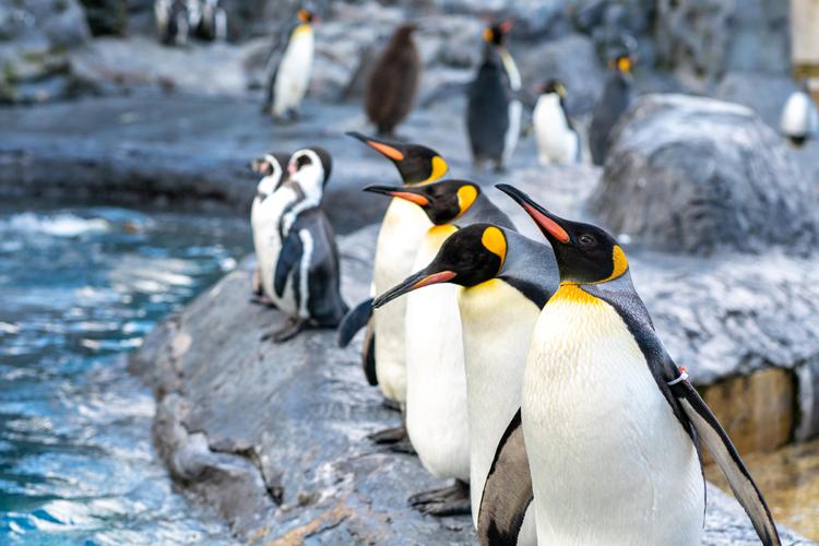 ペンギンアップデートとは?(Googleの順位アルゴリズム変動は4.0でリアルタイムに)